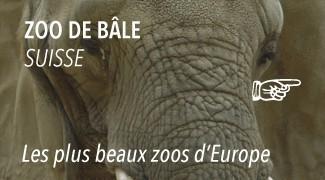 Le Zoo de Bâle