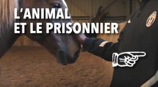 L'Animal et le Prisonnier